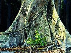 besondere tierarten im tropischen regenwald